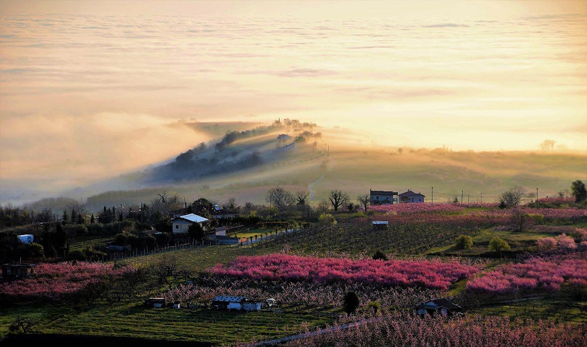 News: peach tree blossom puts Veria on the touristic map