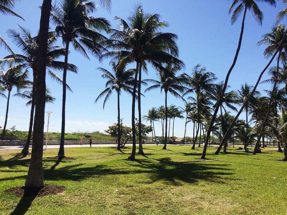 Miami2CFlorida-1.jpg