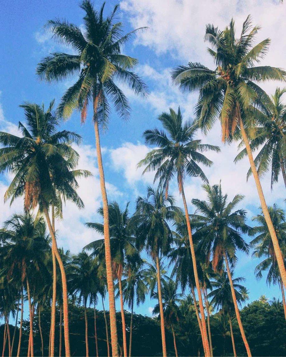 TaveuniIsland2CFiji.jpg