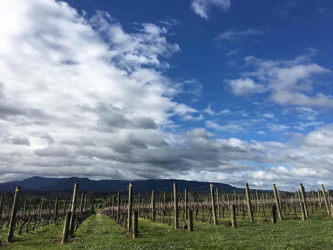 The Weekly Getaway: The Ultimate Wine Tour in Australia
